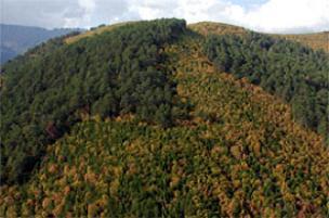 Böcekler koca ormanı yedi bitirdi.14845