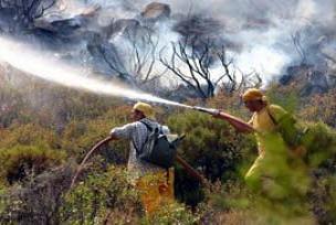 Selçuk'ta orman yangını çıktı.15154