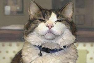Kedi 13 yıl sonra evine döndü.10492