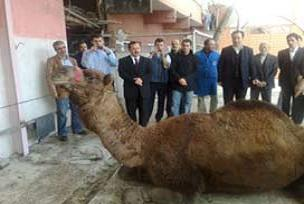 Havayolları bir deve daha kesti.12819
