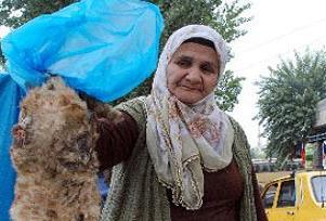 Şanlıurfa'da kediye akıl almaz işkence.17500