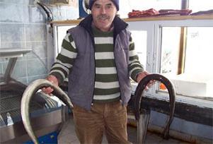Enez'de yılan balığı bereketi.13603