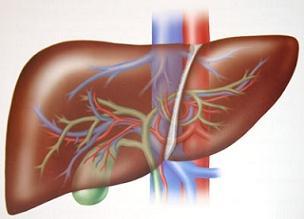 Karaciğer hakkında 14 önemli soru.10033