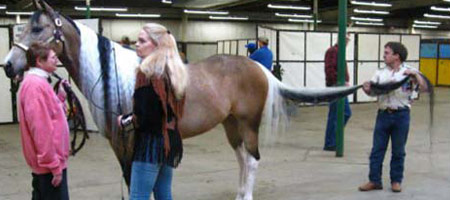 Dünyanın en uzun kuyruklu atı 39798