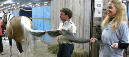 Dünyanın en uzun kuyruklu atı 39799