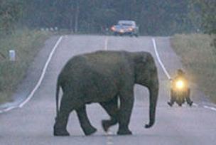 Aç bırakılan filin intikamı ağır oldu.8752