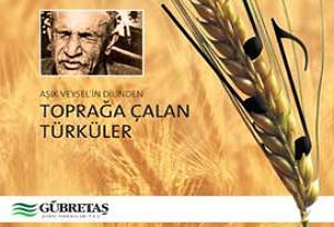 Aşık Veysel'in yayınlanmamış türküleri.15443