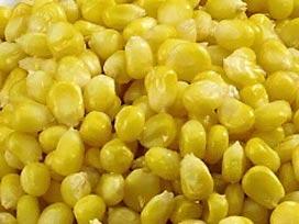 Fındık, mısır üreticilerine müjde.13555