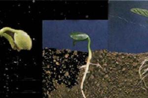 Kuraklığa dayanıklı tohum yaptı .10600