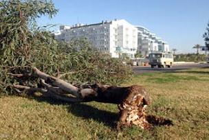 Şiddetli rüzgâr ağaçları kökünden söktü.17700