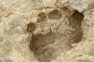1.5 milyon yıllık ayak izleri!.15154
