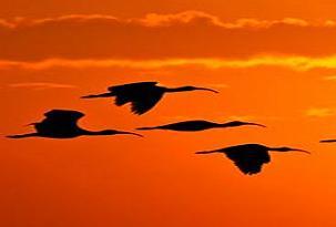 Kuş türleri tehlike altında!.6839