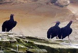 Göçmen kuşların yolları uzadı.13856