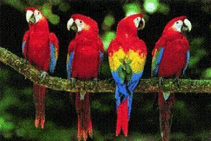 Başına Papağan yuvası düştü öldü.21015