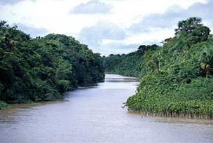 Amazon'un su seviyesinde tarihi artış.13279