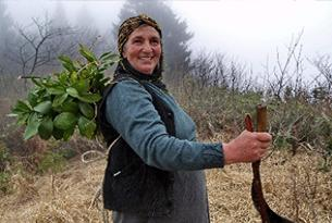Karadeniz kadını 7 gün 24 saat çalışıyor.16230