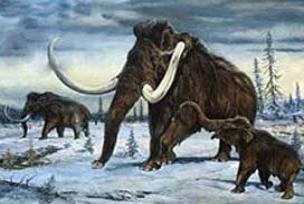 Mamut iskeleti 145 bin avroya satıldı.14087