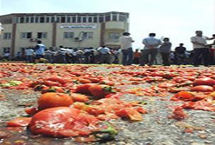 Çiftçiler ürünlerini yola döktü.43232