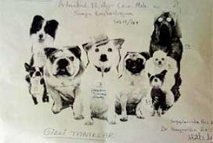 Sanık gizli tanıkları köpeğe benzetti.11420
