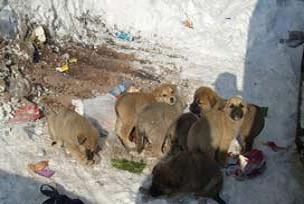 Sokak hayvanlarına acımasız uygulama.13950