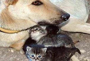 Kedi ve köpeklerin büyüttüğü kız çocuğu.14151