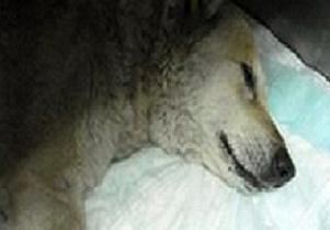 The Marmara'nın 'Ebru' köpeği öldürüldü.8746