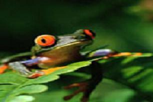 Sürekli renk değiştiren kurbağa.8801