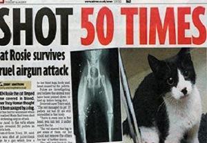 Bu kediye çok şaşıracaksınız.17918