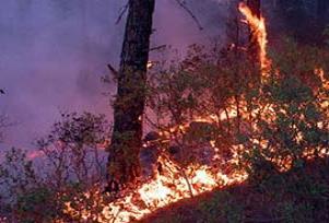 Antalya Manavgat'ta orman yangını.14991
