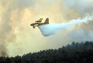Muğla'daki yangında 4 dekar kül oldu.8388