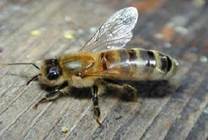 Konya'da arı sokan adam öldü.13266