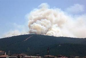 İzmir'in Kemalpaşa'da orman yangını.7641