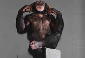 Kalorisi azaltılan maymun çok yaşadı.6848
