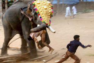 3 işçi öfkeli filin altında kalarak öldü.12918