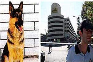6 kahraman köpek ihmale kurban gitti.16336
