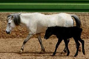 At yetiştiriciliğine kadın eli değdi.14555