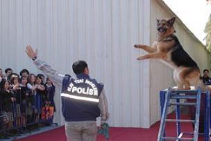 Efsane köpek 'Maske' yaşıyor.10966