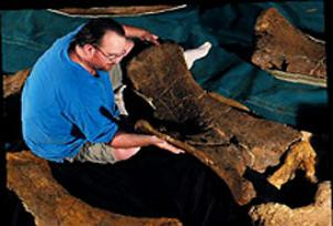 3 yeni dinozor fosili keşfedildi.13788