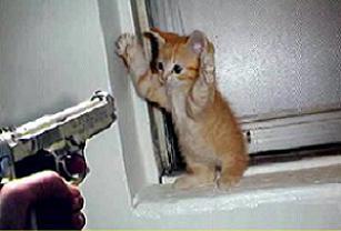 Tüfekle kedi avına 1344 TL ceza.23576