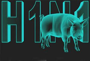 Kıbrıs'ta domuz gribi vakası artıyor.10284