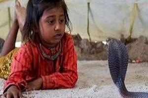 Kobra yılanları çocukların oyuncakları! (FOTO).12594