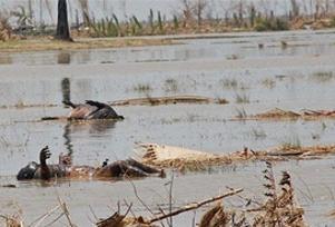 Myanmar'da toprak kayması: 30 ölü.13996