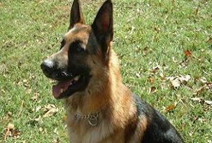 Kahraman köpeklerin faturası polise.22291