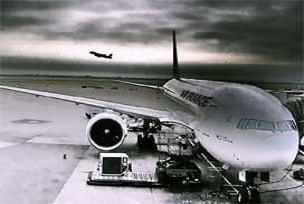 New York'ta uçaklar kaplumbağalara takıldı.12416
