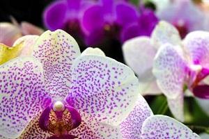 Orkide cenneti.34579