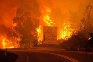 Portekiz'de orman yangını çıktı! En az 39 ölü!.13964