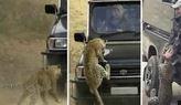 Leopar'� ancak b�yle durdurabildiler