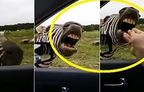 �ark� s�yleyen Zebra - �zle